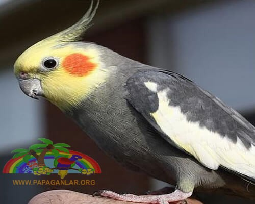 sultan-papagani.jpg