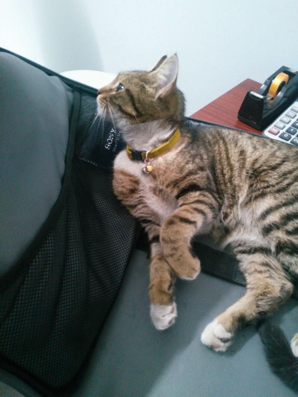 bulunan kedi 2.jpg