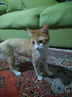 kedi2.jpg