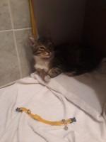 bulunan kedi 4.jpg
